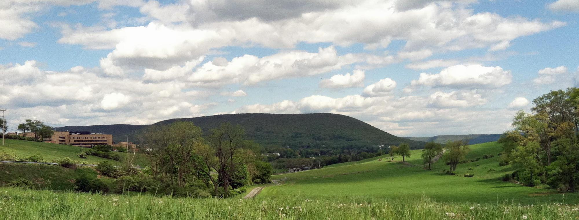 Mount-Nittany-with-Flowers-cropped
