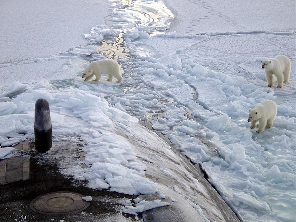 Polar Bears and Submarine