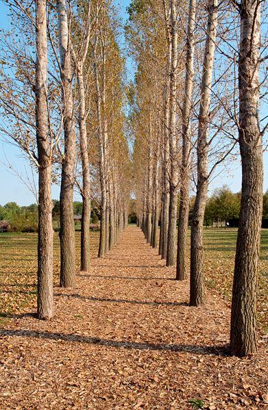 Illinois Arboretum